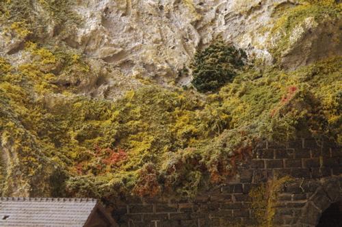 http://www.wipkink.nl/rcblog103/files/juli10/planten13.jpg
